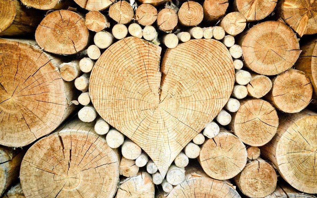 紐原木、紅肉出口創新高  帶動其他產品出口增長
