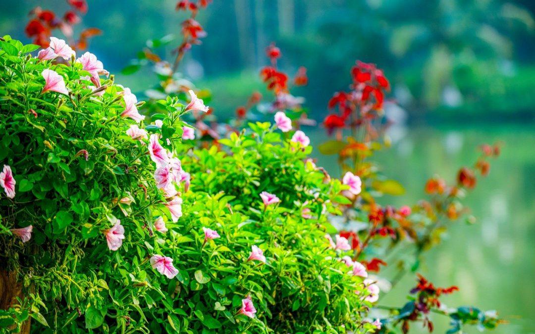 紐西蘭最好的春季花園之旅指南 請查收
