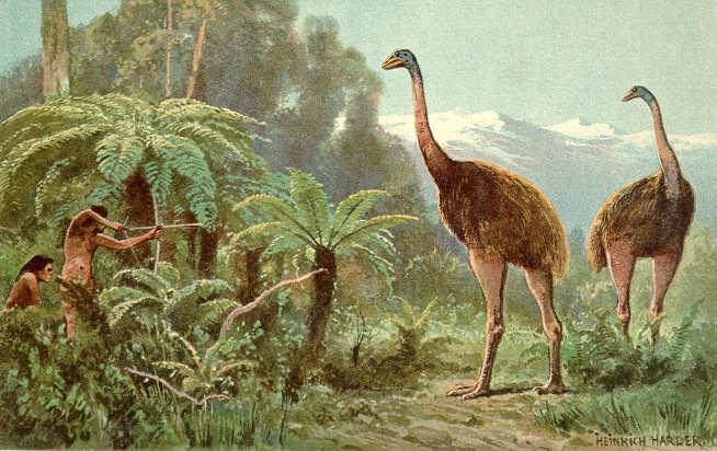 南地這個博物館的恐鳥骨頭竟被偷 警方正在呼籲知情者提供信息