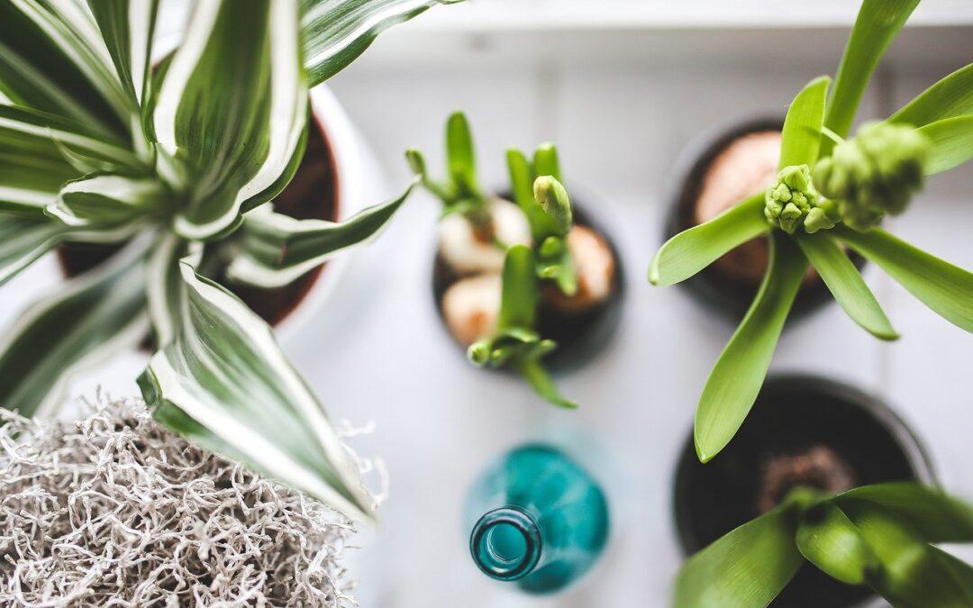 室內植物控看過來 紐人現今最愛的10種室內花草及養護指南全在這裡